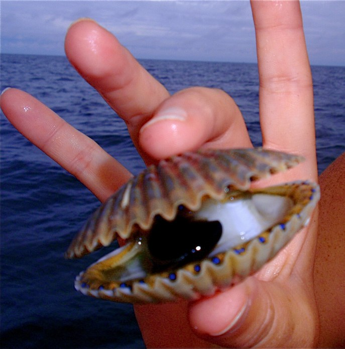 upclose look of a scallop caught out of homosassa florida